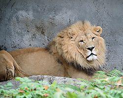 Seattle_Zoo_20131026_062.jpg
