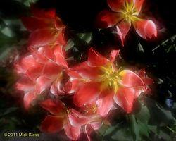 Silky_Glow.jpg