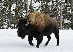 Yellowstone-0361.jpg