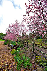 Aperture-Blossoms-web.jpg
