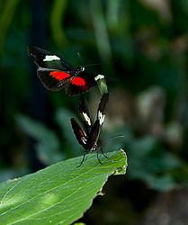 Dance_of_the_Butterflies.jpg