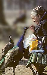 Peacock_me.jpg