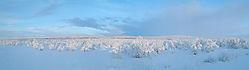 winter_in_lapland.jpg