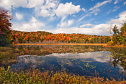 Foliage_at_Harrisburg_Lake.jpg