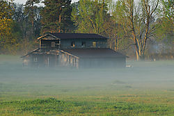 foggy_morning4.jpg