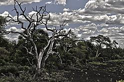 Dead_Tree_HDR.jpg
