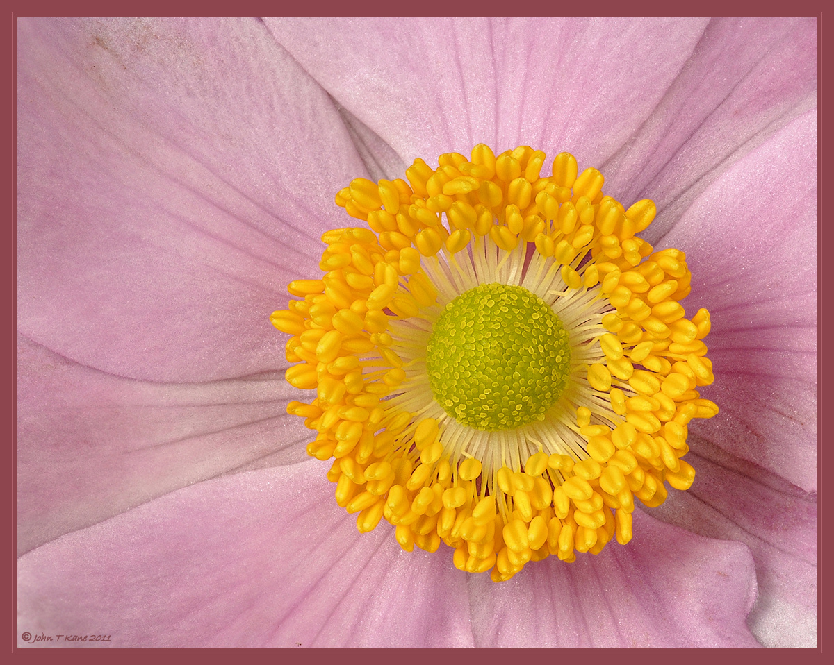 Anenome_Japanese_STACK_3_DSC_447-449