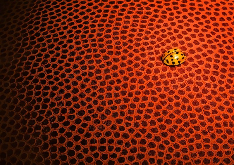 """Nikon D90, F/36, 1/13, sec, ISO 200, Tamron 90mm macro  My intent was to come up with a 'similar pattern' contrast, between the large-sized basketball and the diminutive ladybug.  Winner of the Macro forum's """"Patterns and Symmetry"""" challenge:  http://www.nikonians.org/forums/dcboard.php?az=show_topic&forum=169&topic_id=45350&mesg_id=45350&page=4"""