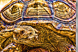 Turtle_copy2-Edit.jpg