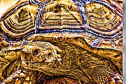 Turtle_copy2-Edit.jpg