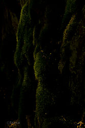 Enrico_Yosemite-231.jpg