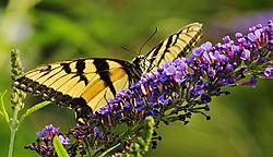 2011-06-05_Mercer_Arboretum_024.JPG