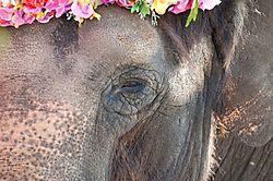 Sad_Del_Mar_Fair_Elephant.jpg