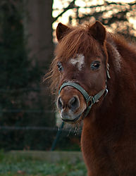 Pferdeportrait.jpg