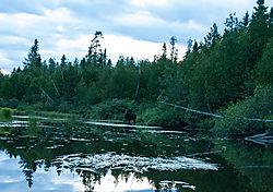 DSC_6066_-_Moose_in_Creek_from_LR_for_Posting.jpg