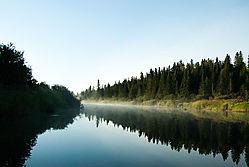 DSC_6078_Morning_on_the_Stream.jpg