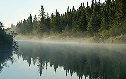 DSC_6079_Morning_Mist.jpg