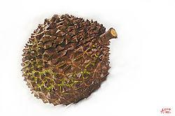 durian_sm.jpg