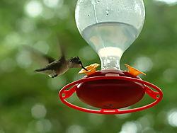 hummingbird2-galerie.jpg