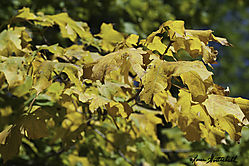 Leaves_MID49061.jpg