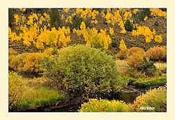 Gold-Hillside.jpg