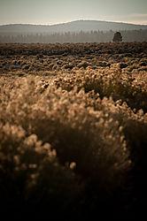 Day_3_High_Sierras-3.jpg