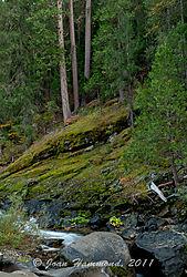 Merced_River-4442.jpg