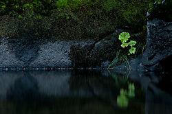 Quiet_Light-1.jpg