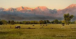 Sierra_Ranch_copy.jpg