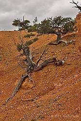 Utah20111005_079-HDR.JPG