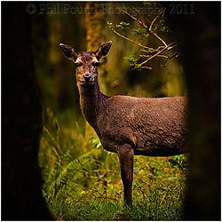 Deer_3485.jpg
