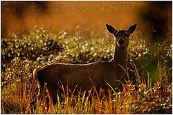 Deer_3739.jpg