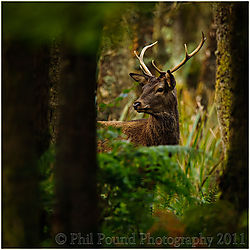 Deer_4161.jpg