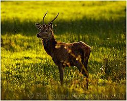 Deer_5554.jpg