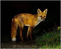 Fox_4302_copy.jpg