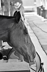 Equine_Dreams.jpg