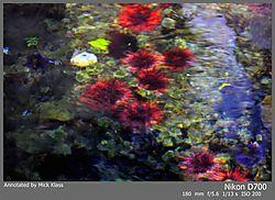 Aqua_Botanica1.jpg