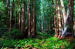 Muir_Woods_II_Nikonians.jpg