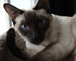 Sammy-Jan2012.jpg