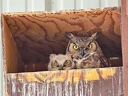 owls_156.JPG