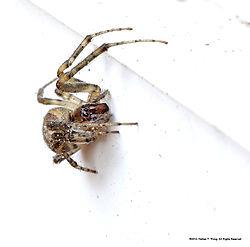 Spider29.jpg