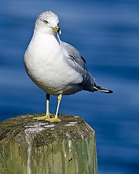 seagull12.jpg