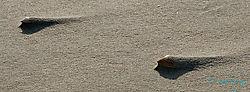 shell_dunes.jpg