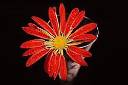 crisantemo1_hff.jpg