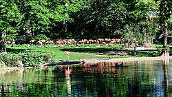 Zoo_Koeln-0398_kopieren.jpg