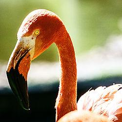 Zoo_Koeln-0537.jpg