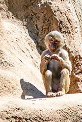 Zoo_Koeln-0569.jpg