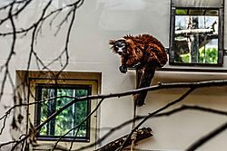 Zoo_Koeln-0727.jpg