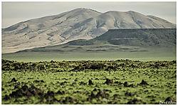 Green_landscape.jpg