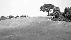 Toscana_Landscape_D7K3115_IV_sw_NX2.jpg